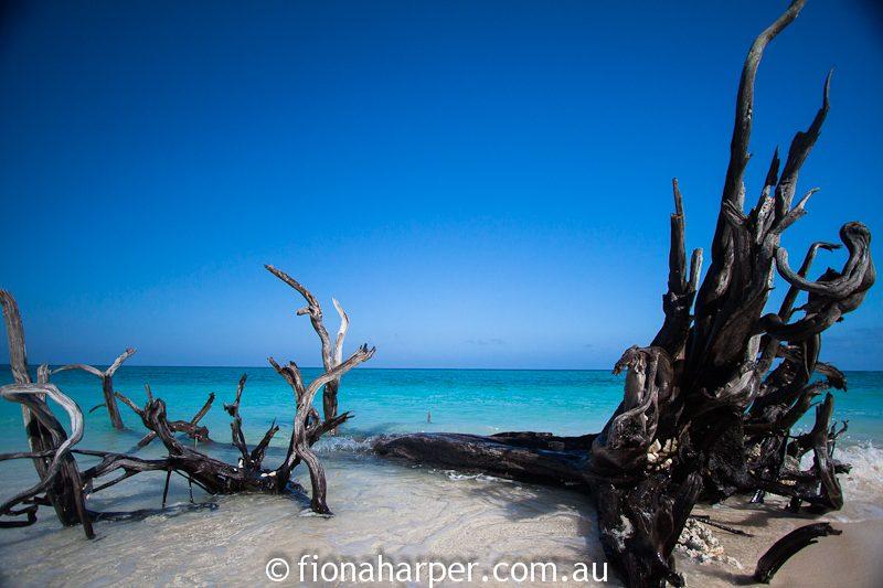 Lady Musgrave Island beach, Great Barrier Reef QLD Australia