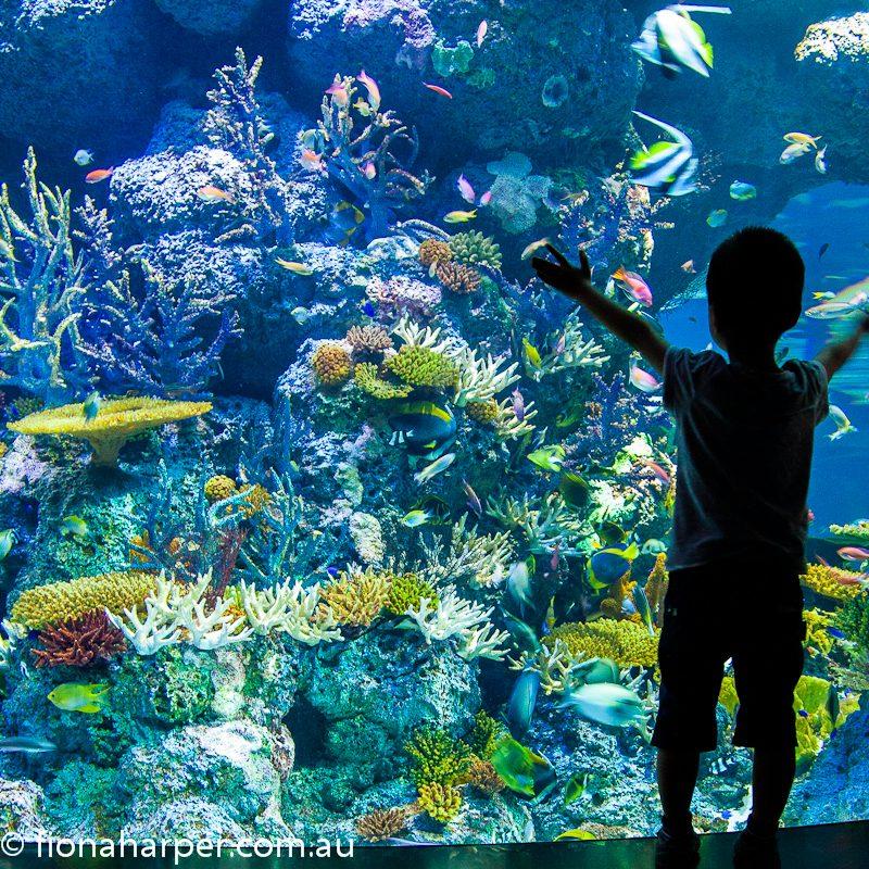 Excited boy enjoys SEA aquarium, Singapore