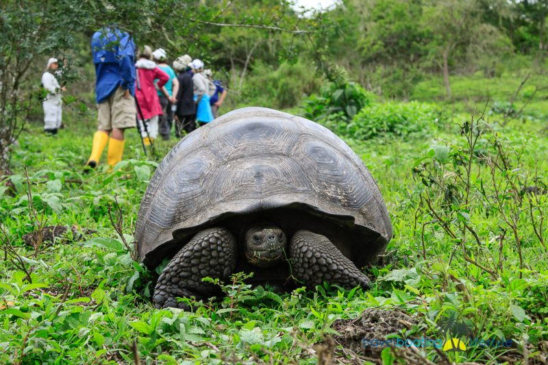 Galapagos Islands with National Geographic | Travel Boating Lifestyle