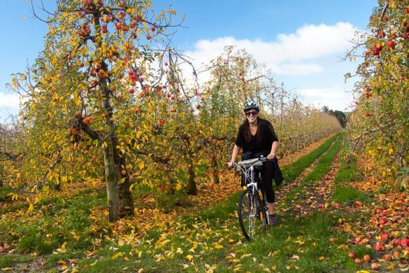 Riding the Great Taste Trail NZ