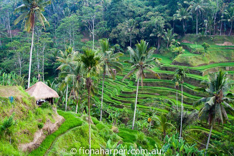 Bali rice paddies, Image by Fiona Harper travel writer
