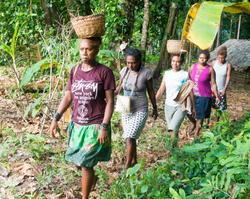 Ladies collect yams for the feast to celebrate Wogasia Spear Festival, Santa Catalina Island, Solomons Island