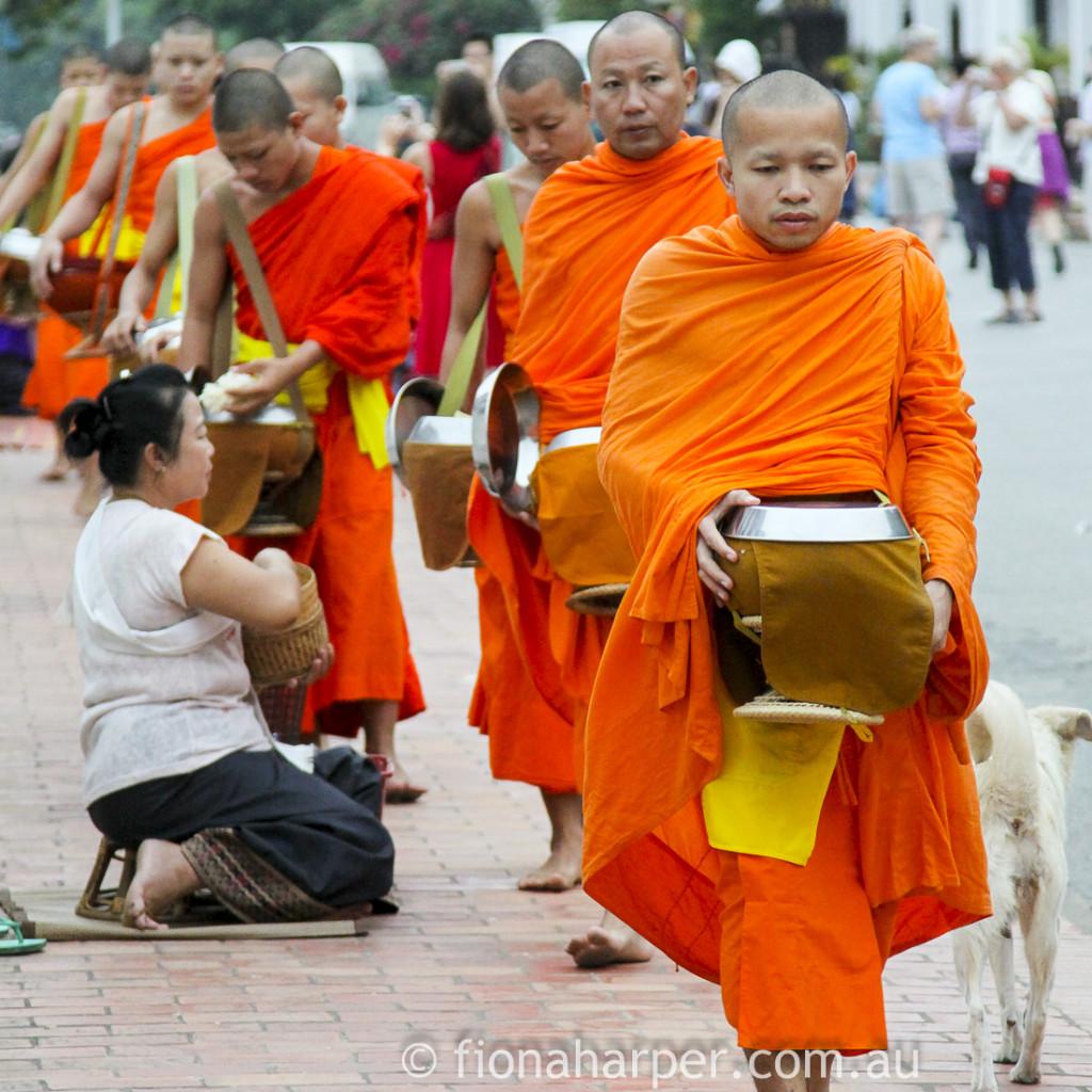 Monks alms giving ceremony, Luang Prabang half marathon, Laos