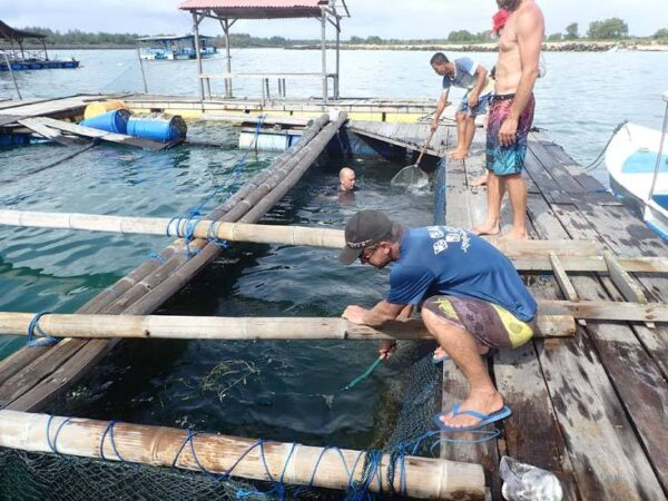 Bali Shark Rescue Centre   Travel Boating Lifestyle